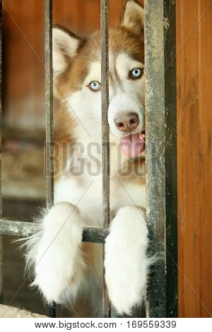 Portrait of cute homeless laika in animal shelter cage