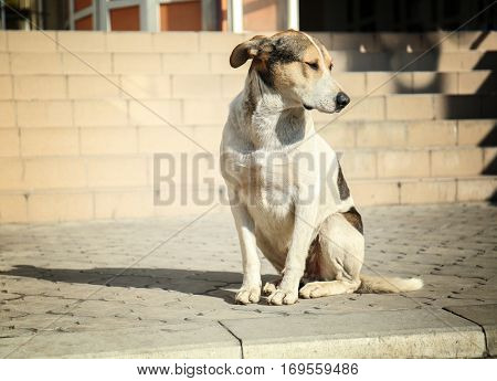 Homeless dog sitting on the street