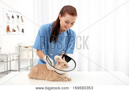 Pretty young veterinarian putting cone of shame on cat