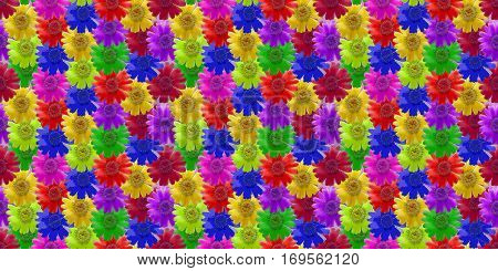 kosmeya. Colorful texture of flowers. Seamless pattern for continuous replicate. Beautiful photo collage.