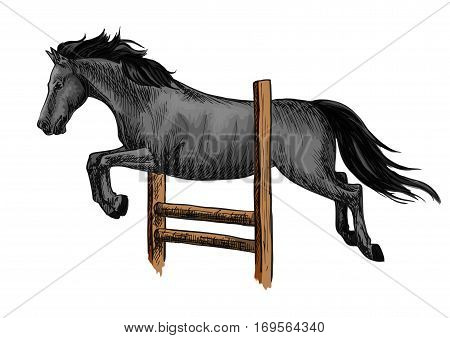 Black mustang stallion racing and jumping over barrier. Vector horse sketch for equestrian sport, horse riding, equine design
