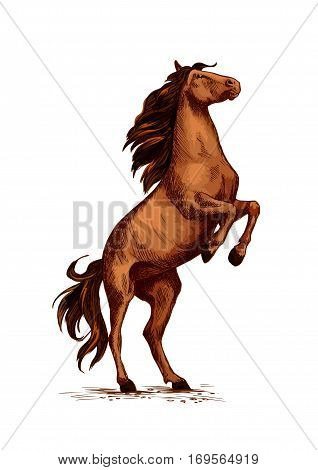 Horse or wild stallion rearing. Arabian brown mustang trotter on rears. Vector symbol for equine sport races or rides. Racehorse mustang or racer for equestrian sport contest or exhibition