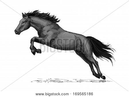 Horse or wild stallion running in gallop and jumping over. Black mustang trotter racer or racehorse vector symbol for equine sport races or rides, equestrian sport contest or exhibition