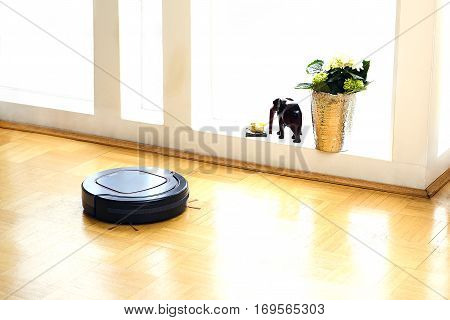 Robot vacuum cleaner in the living room.