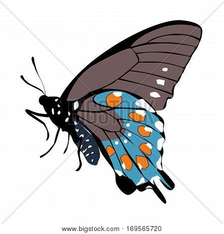 color icon gray beautiful blue butterfly on a white background. pattern to decorate the scrapbook album page. vector illustration