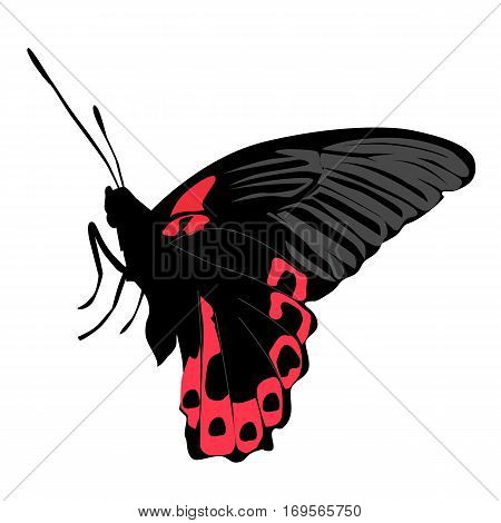 colored icon beautiful black and pink butterfly on white background. pattern to decorate the scrapbook album page. vector illustration