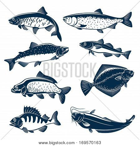 Fishes vector isolated icons of herring, pink or humpback salmon, navaga or saffron cod and carp, flounder and perch, sheatfish or catfish. Blue fish symbols set for seafood restaurant sign, fishing club or fishery industry, fish market or shop