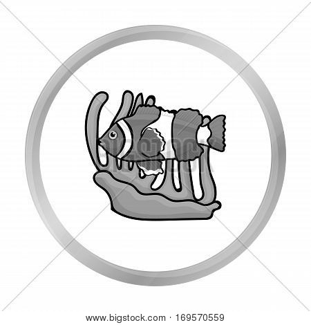 Clownfish and anemone icon in monochrome design isolated on white background. Australia symbol stock vector illustration.