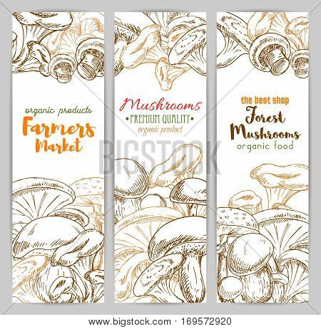 Mushrooms farmer market banners of sketch edible mushrooms champignon, chanterelle, russule and milk mushroom or honey agaric, gourmet morel and truffle, forest woolly milkcap porcini and forest cep. Vector vertical design set