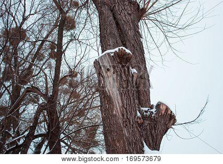 hollow woodpecker bird in the forest. winter landscape