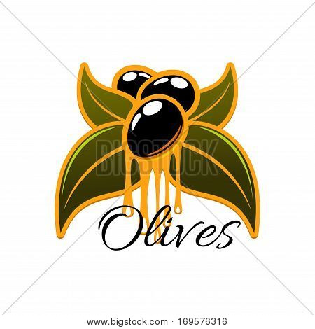 Olive oil dripping from fresh olives. Vector icon olive tree branch with green leaves and black ripe olive fruits. Isolated emblem or symbol for olive oil bottle label, vegetarian vegetable food, salad dressing or olive-pomace sauce