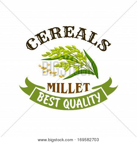 Millet vector icon or poster. Cereal seed grass plant of proso or broomcorn ear with leaves. Vegetarian or vegan healthy diet nutrition food and porridge ingredient for grocery store, market or package design with ribbon