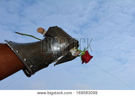 The gentleman - an iron knight's hand holds red rose firmly in the fist