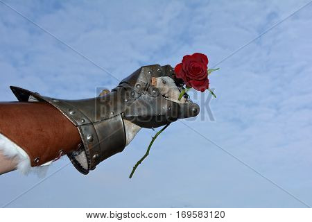 The gentleman - iron knight's hand with red rose before blue sky
