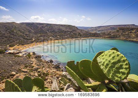 Malta - Huge cactus at Ghajn Tuffieha sandy beach with blue sky and crystal clear green sea water