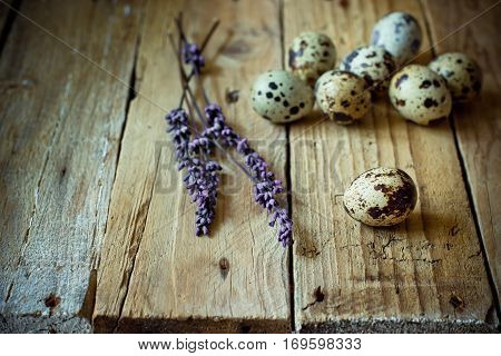 Scattered quail eggs on aged planked wood background with lavender twigs, rustic vintage style, minimalist, kinfolk, Easter, tranquility and simplicity concept