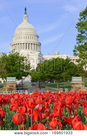 United States Capitol Building in Washington DC USA