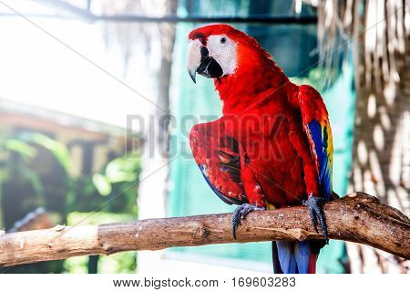 Parrot lovely bird, clever animal and pet