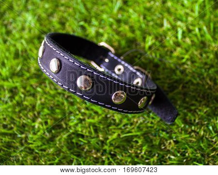 Leather Collar For Dogs