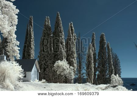 Infrared landscape. In this type of filming foliage changes its color to white.