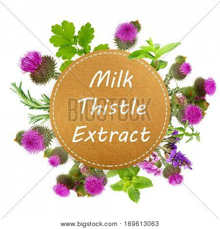 Text MILK THISTLE EXTRACT and herbs on white background