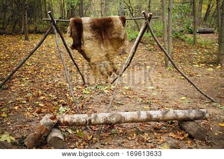 Animal skins drying on wooden stakes in Chukchi camp in autumn forest