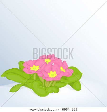 Beautiful spring background with Primula Vulgaris in snow. Greeting cards congratulations with spring or Women's Day. Holiday poster or placard template in simple cartoon style. Vector illustration. Flower Collection.