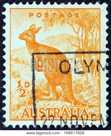 AUSTRALIA - CIRCA 1959: A stamp printed in Australia shows a Wallaroo, circa 1959.
