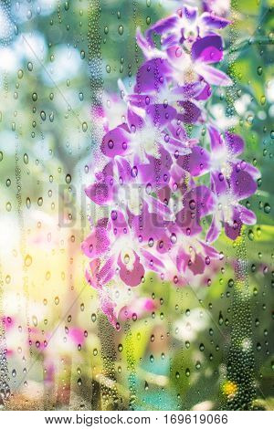 Orchid purple see through glass with drops of water.