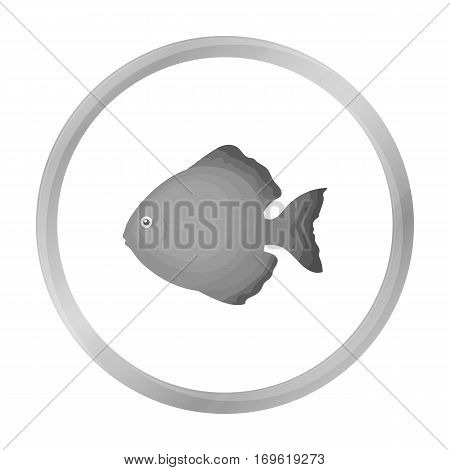 Discus fish icon monochrome. Singe aquarium fish icon from the sea, ocean life monochrome.
