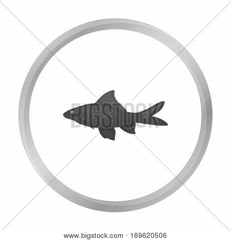 Red Tail Shark fish icon monochrome. Singe aquarium fish icon from the sea, ocean life monochrome.