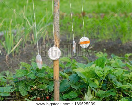 Russian folk remedy for repelling birds in agro-industry