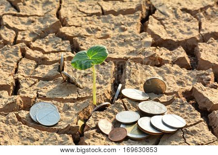 desolate land or dry areas have little green plant and coins