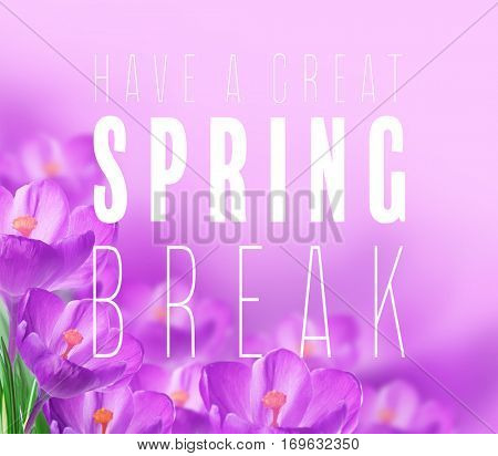 Text HAVE A GREAT SPRING BREAK and flowers on color background. Additional education concept