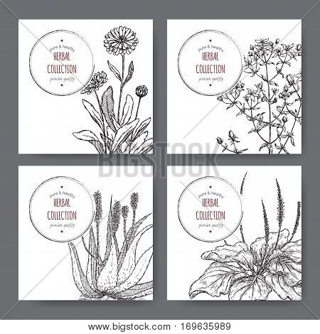 Set of 4 vector herbal tea labels with calendula, saint john wort, aloe vera and plantago hand drawn sketch. Placed on white background.