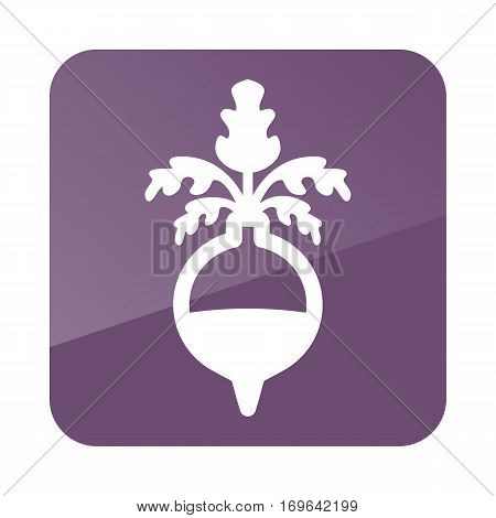 Rutabaga or Swede outline icon. Vegetable root vector illustration