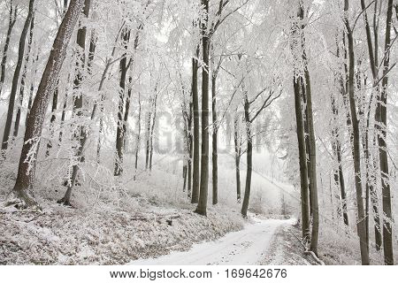 Forest path in winter scenery . Poland.