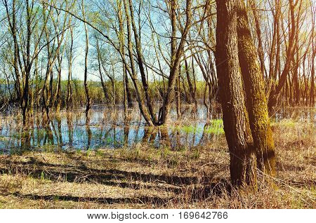 Spring forest landscape - trees flooded with overflowing river water in sunny weather. Spring forest landscape in sunny weather. Colorful spring forest landscape view. Spring forest nature