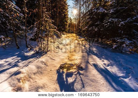 Forest path covered with snow at sunset. Trees illuminated by sunlight. Moravian landscape Pohora.