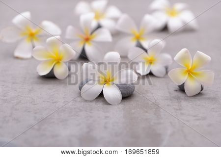 Pile of frangipani with gray stones on grey background.
