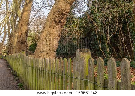 Old wooden fence with small moss groing in it just in front of some trees in the park