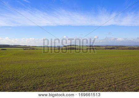 Sunny Wheat Fields