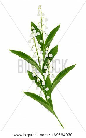 Composition with lily of the valley flowers isolated on white