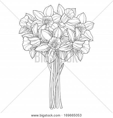 Vector bouquet with outline narcissus or daffodil flowers in black isolated on white. Ornate floral element for spring design, greeting card, coloring book. Bunch of narcissus flower in contour style.