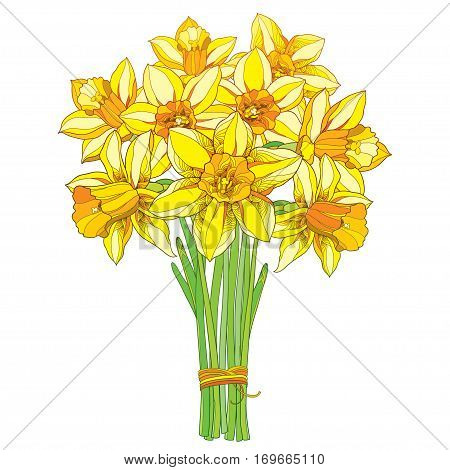 Vector bouquet with outline yellow narcissus or daffodil flowers isolated on white. Ornate floral element for spring design, greeting card, invitation. Bunch of narcissus flower in contour style.