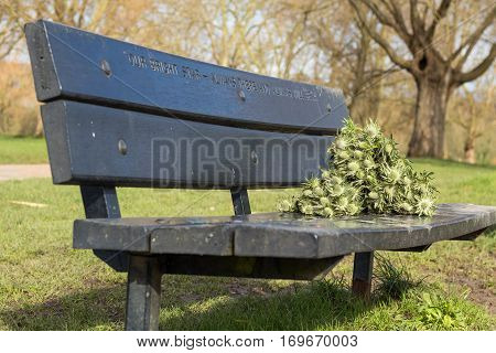 A bench set in the park in memorial of someone loved that died. Remembered by someone that left a couple of green flower in it.