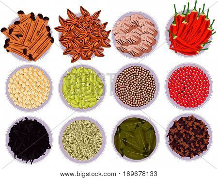 Vector Spices Set collection of cinnamon quills feverfew nutmeg bay leaf cardamom vanilla pink white pepper mustard hot chili clove star anise healthy food concept  breakfast lunch and dinner meals
