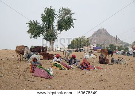 PUSHKAR, INDIA - FEBRUARY 17: People selling grass stalks to Hindu passersby for them to feed to the cows which are revered by their religion  in Pushkar, India on February 17, 2016.