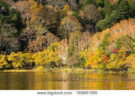 Beautiful forest and lake in autumn