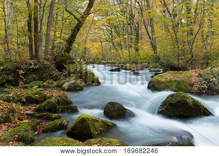 Oirase Gorge Stream in Autumn Red